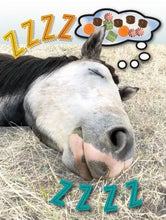 Load image into Gallery viewer, Horse Hollow Dreams Birthday Card