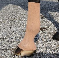 EquiFit GelSox™ for Horses