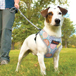 Load image into Gallery viewer, OMNIDEN DIDOG Breathable Pet Harness