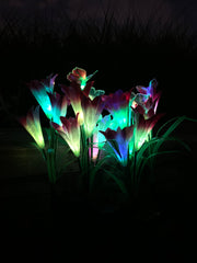 Ihrtrade Artificial Lily Solar Garden Stake Lights (1 Pack of 4 Lilies) | Colored Contact Lenses
