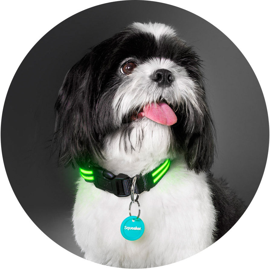 Squeaker Poochlight Black LED Glowing Flashing Collar