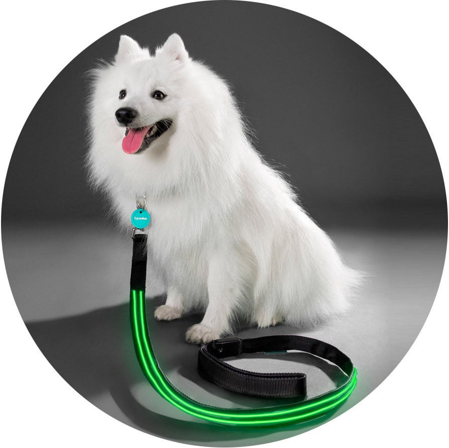 Squeaker Poochlight Black LED Glowing Flashing Leash