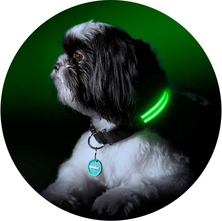 Squeaker Poochlight Black LED Light Up Collar
