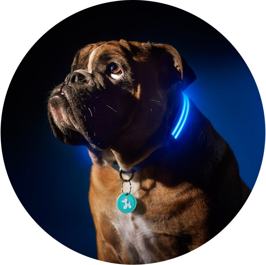 Electric Blue Squeaker Poochlight™ Flashing LED Light Up Dog Collar
