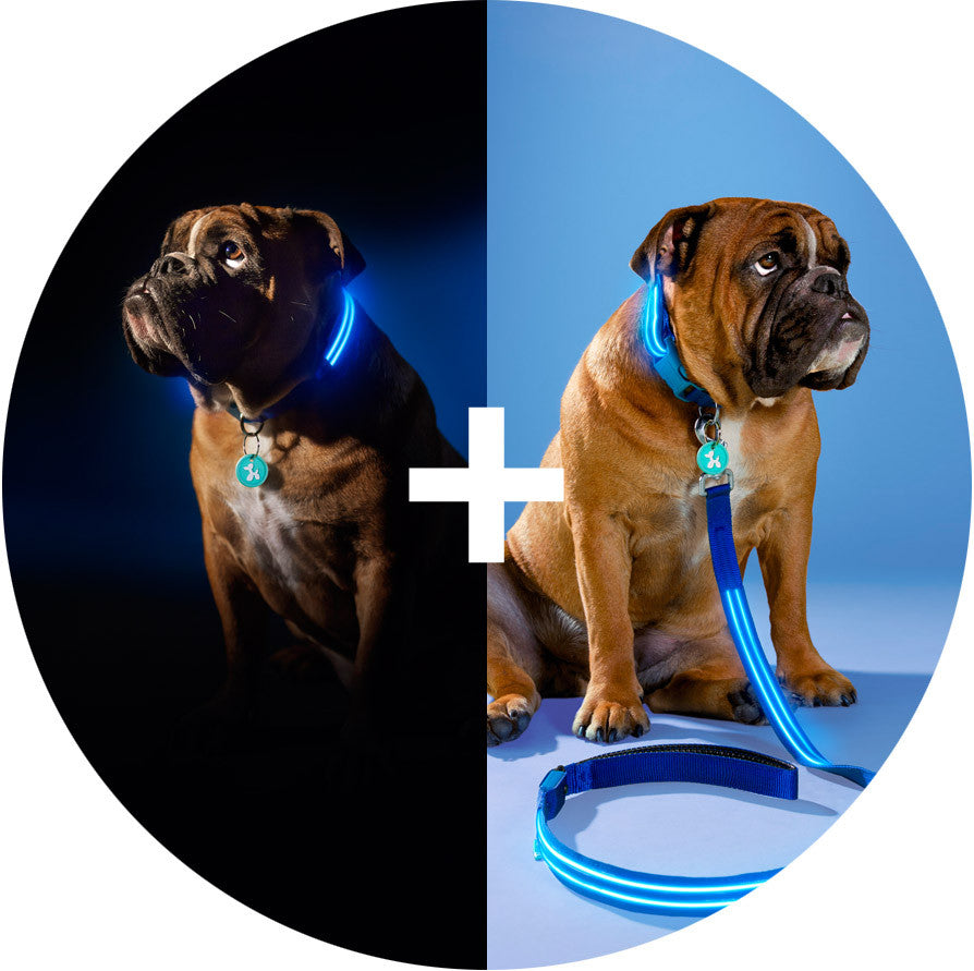 Electric Blue Squeaker Poochlight™ Glowing LED Night Dog Collar Leash Harness
