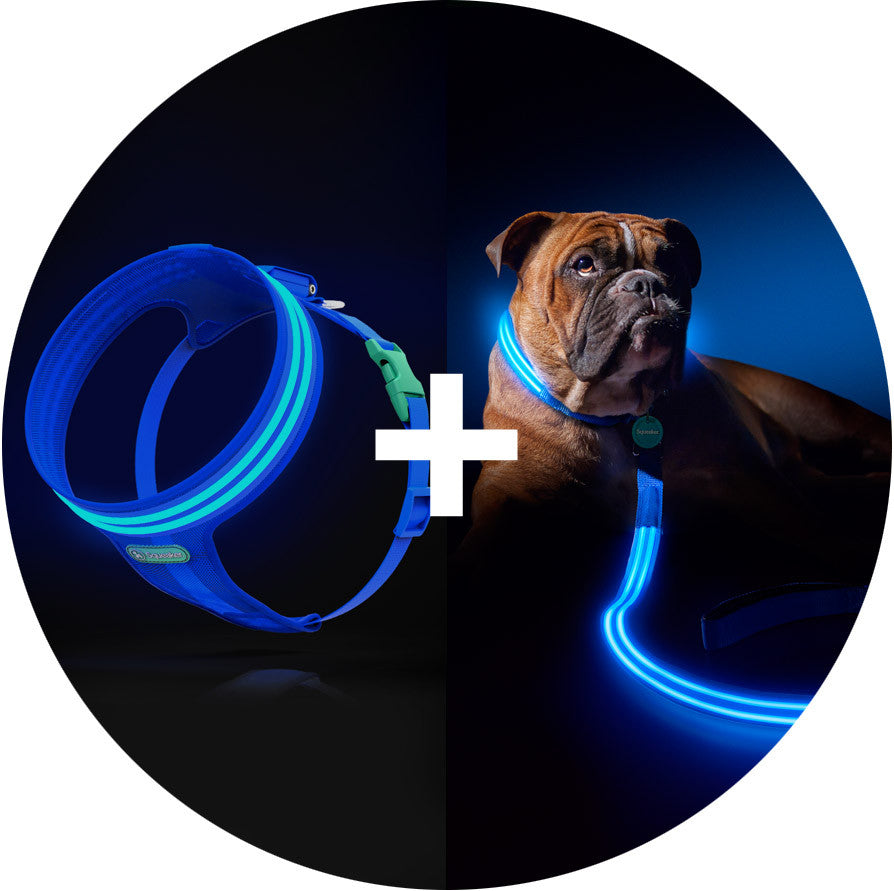 Electric Blue Poochlight™ Harness + Leash Value Combo
