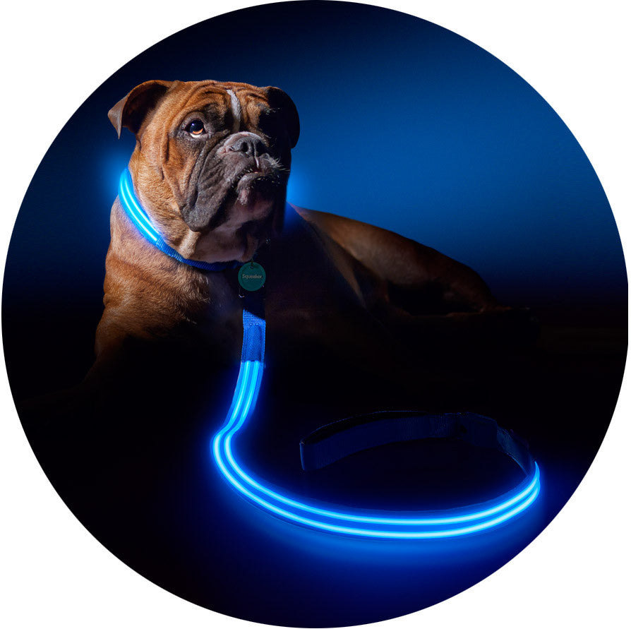 Electric Blue Squeaker Poochlight™ Glowing LED Night Dog Leash