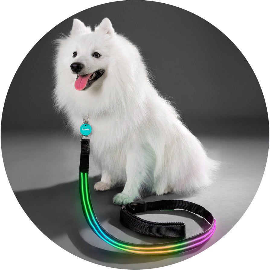 Double Rainbow Poochlight™ Collar + Leash Value Combo