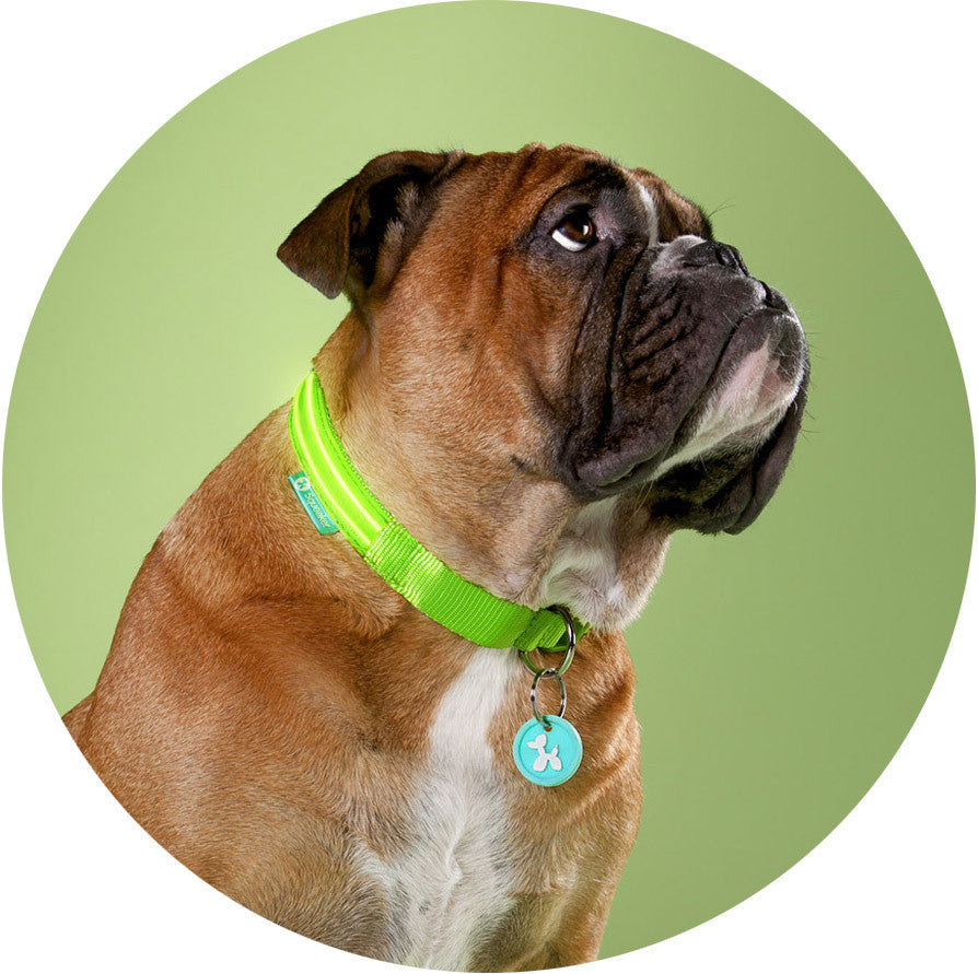 Green Gremlin Poochlight™ Light Up Flashing Dog Collar