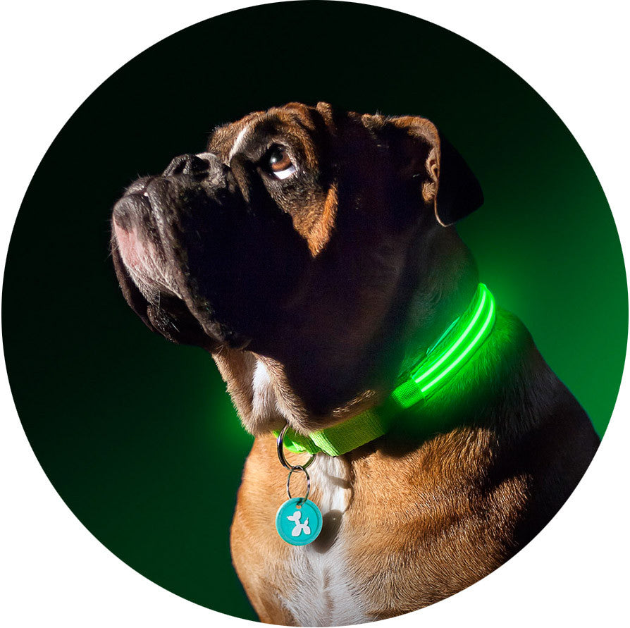 green gremlin poochlight light up flashing dog collar squeaker green gremlin poochlight light up flashing dog collar
