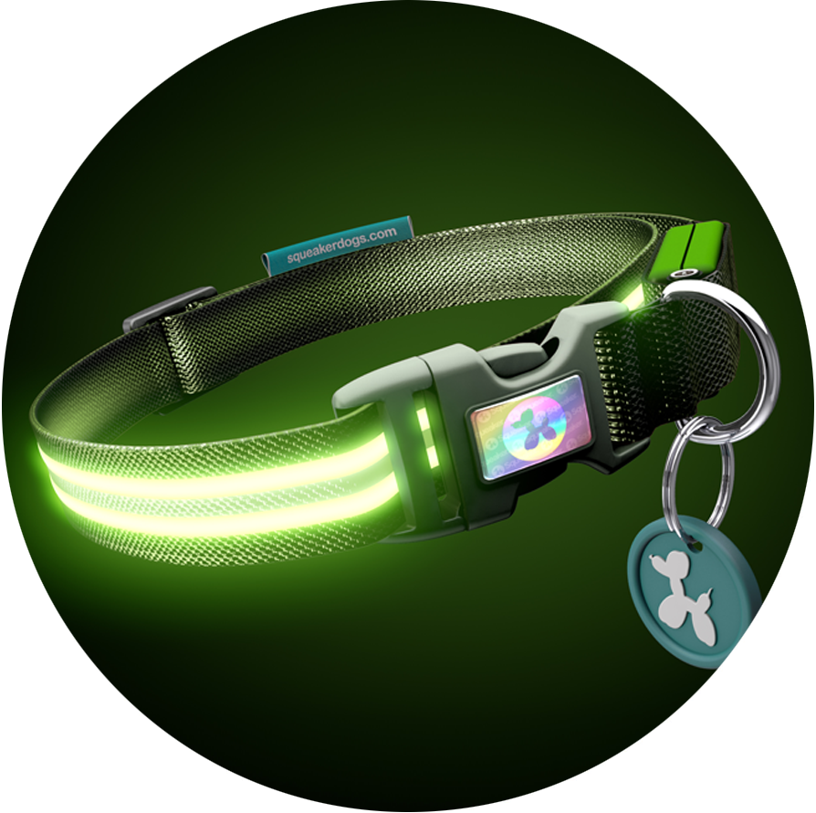 Monster Mash Poochlight™ Light Up Flashing Dog Collar