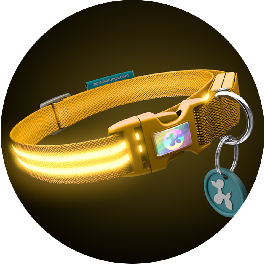 Yellow Gold Poochlight™ Light Up Flashing Dog Collar