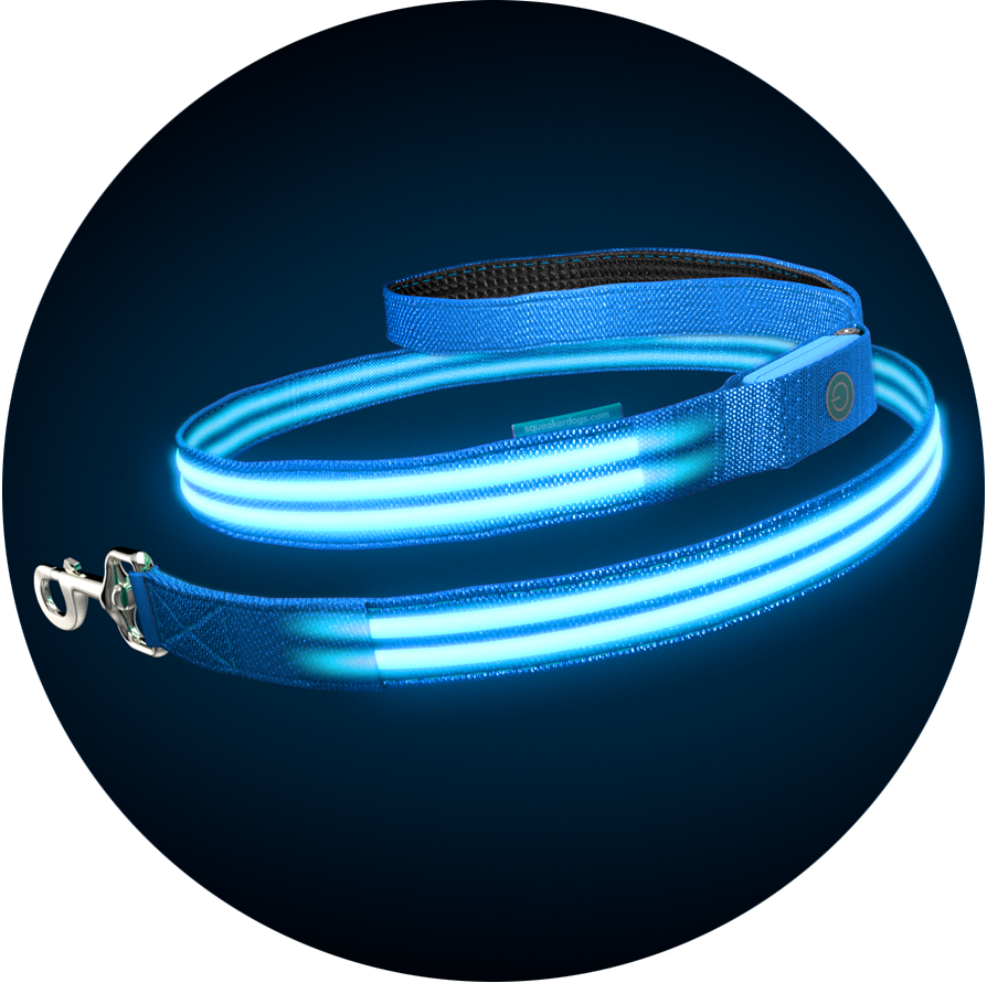Electric Blue Poochlight™ Light Up Flashing Dog Leash