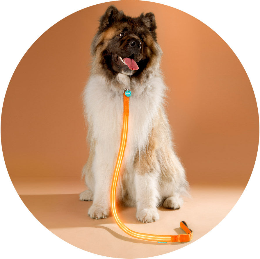 Sunset Orange Poochlight™ Light Up Flashing Dog Leash