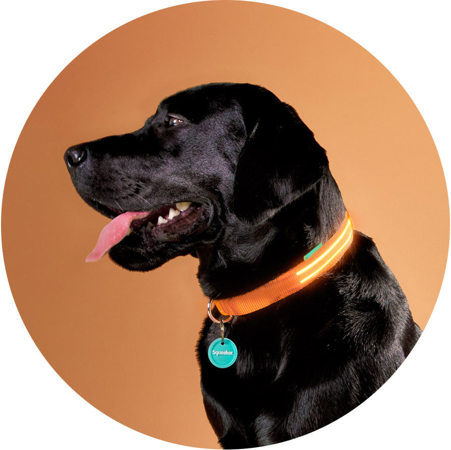 Sunset Orange Poochlight™ Collar + Leash Value Combo