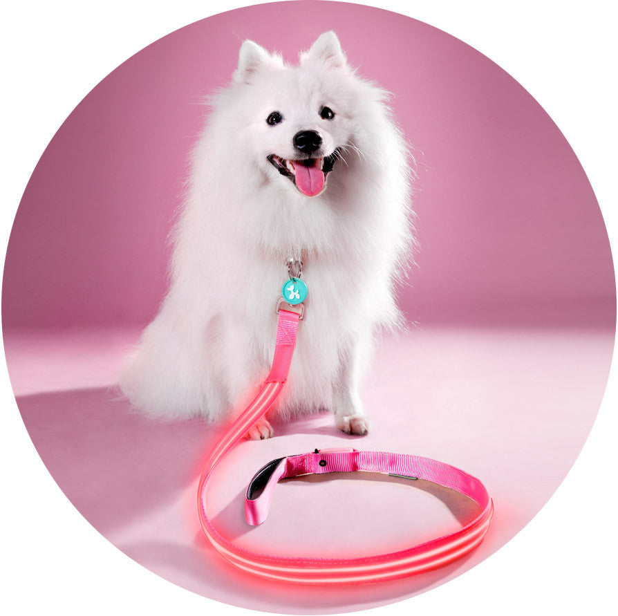 Pink Flamingo Poochlight™ Collar + Leash Value Combo