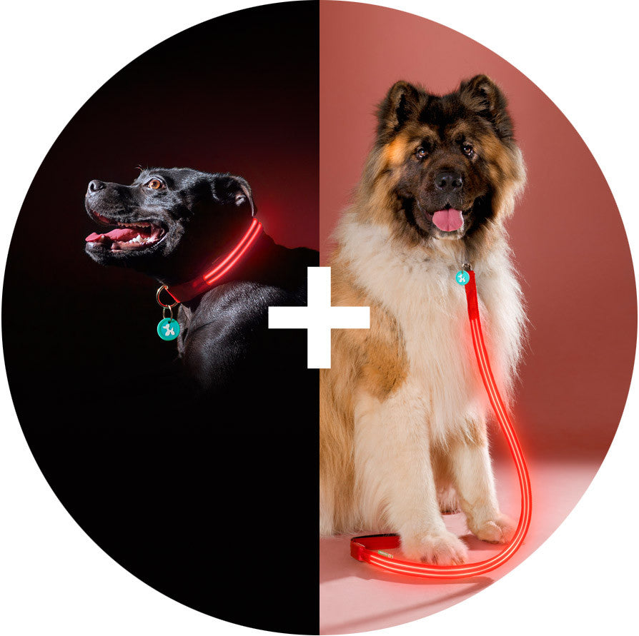 Lava Red Poochlight™ Collar + Leash Value Combo