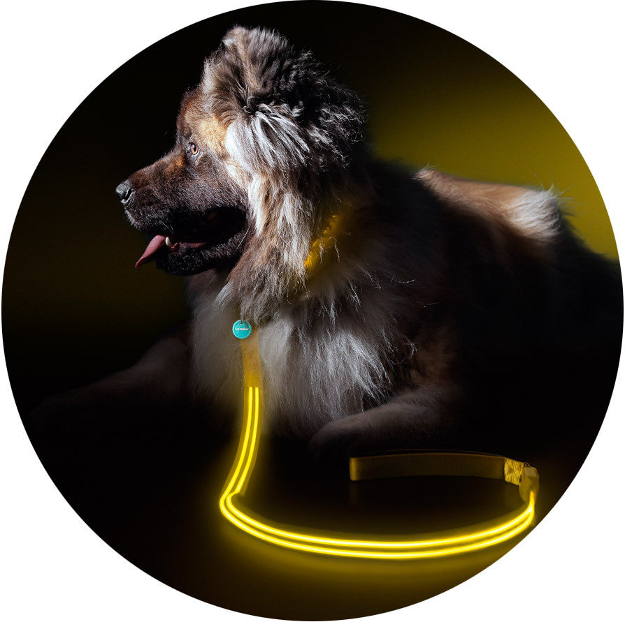 Yellow Gold Poochlight™ Collar + Leash Value Combo