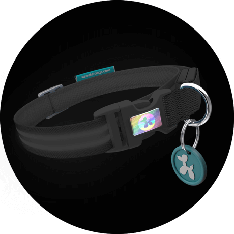 Squeaker I.D. Custom Poochlight™ LED Light Up Flashing Dog Collar