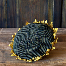 Load image into Gallery viewer, Sunflower Head