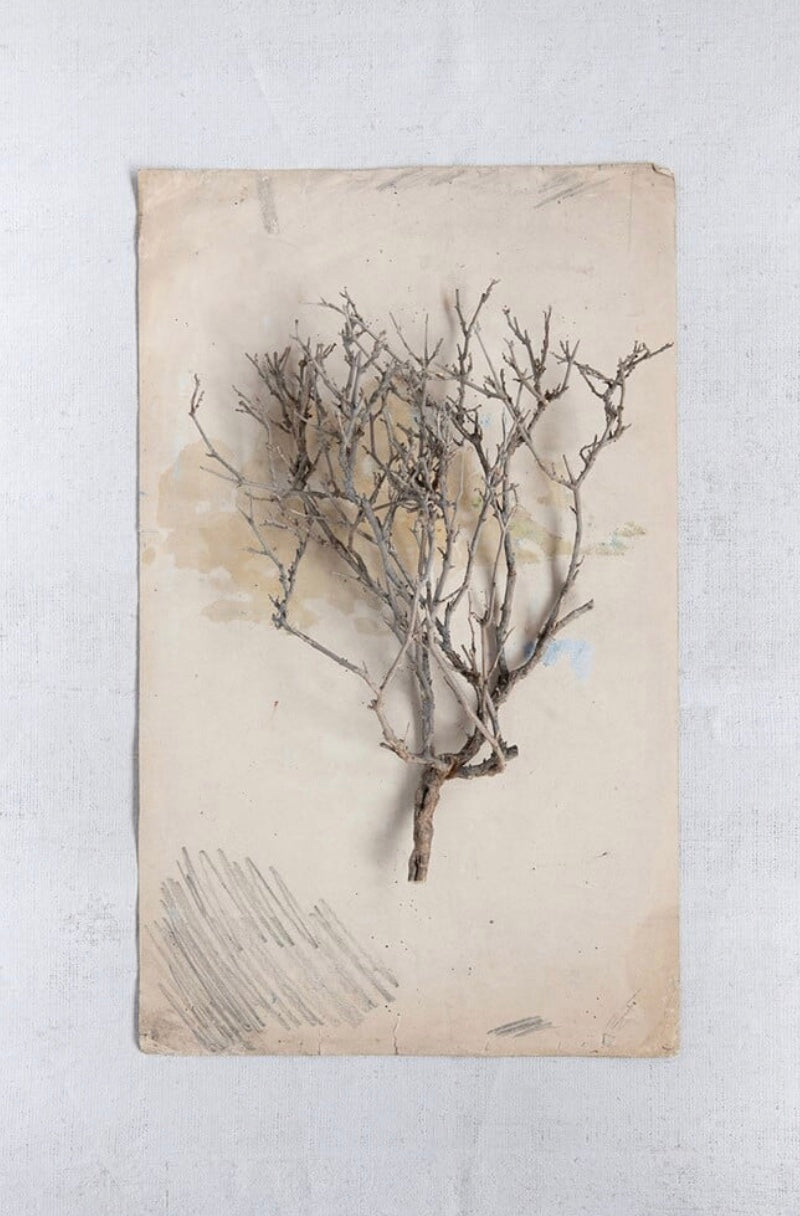 Dried Natural Sea Bush