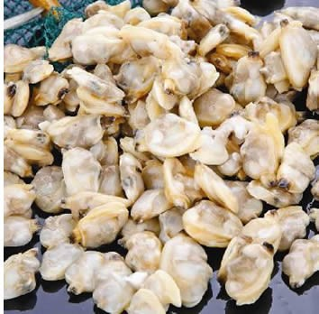 Raw Clam Meat 1kg