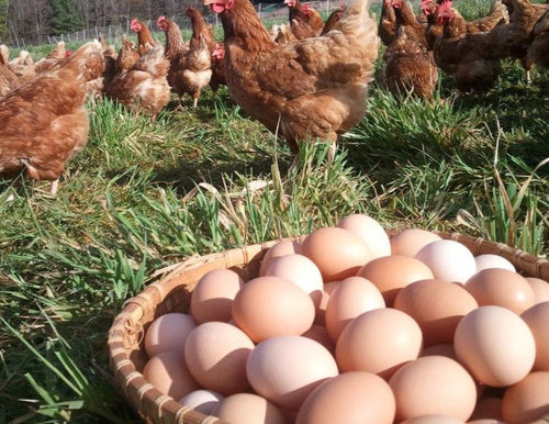 Free Range Farm Fresh Eggs - Together Store Zambia