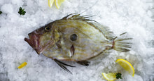 Load image into Gallery viewer, John Dory Fillets