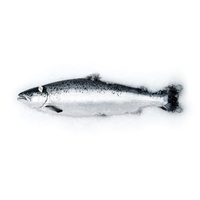 Fresh headed+tailed Gutted Salmon 15% OFF!!!