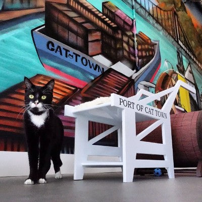 Cat Town Oakland, an innovative cat rescue organization