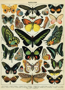 Butterflies  Vintage Reproduction Poster