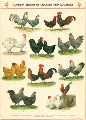 Chickens & Roosters Vintage Reproduction Poster