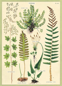 Ferns Vintage Reproduction Poster