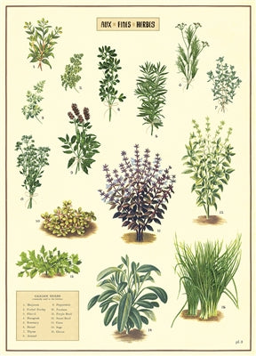 Kitchen Herbs Vintage Reproduction Poster