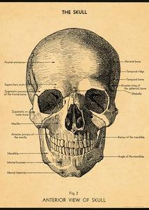Vintage Skull Reproduction Poster