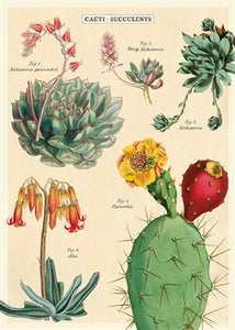 Cacti & Succulents 2 Vintage Reproduction Poster
