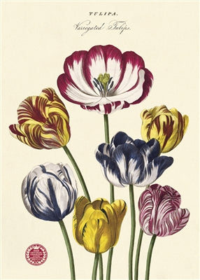 Tulips Vintage Reproduction Poster