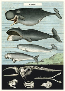 Whale Vintage Reproduction Poster