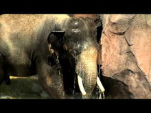 Load and play video in Gallery viewer, Home Safari (Cincinnati Zoo & Botanical Garden)