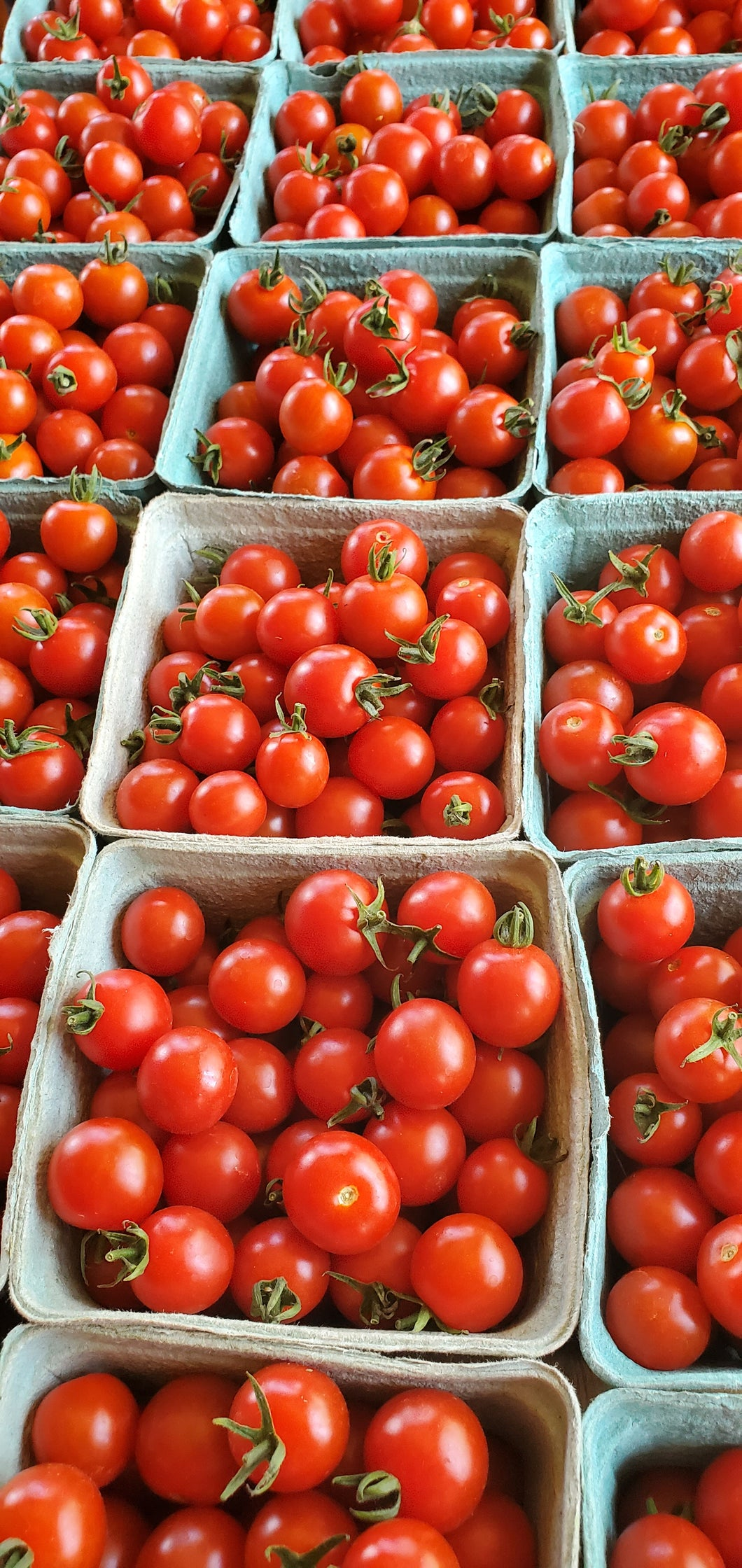 Red Cherry Tomatoes- Spray Free