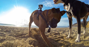 GoPro Fetch, The Dog Mount