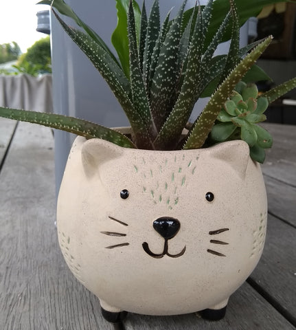 Planter Pot - CAT Valuezy