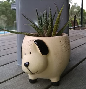 Planter Pot - DOG Valuezy