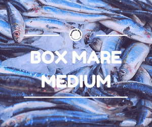 Box Mare Medium - Laboratorio Artigianale Pasta Fresca Online