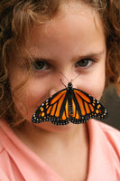 Young girl delighted by a monarch butterfly landing on her nose at a children's butterfly release birthday party.