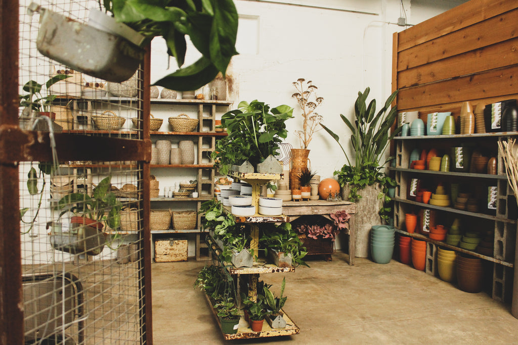 magnolia downtown shop shelves with pottery, plants, and home decor items