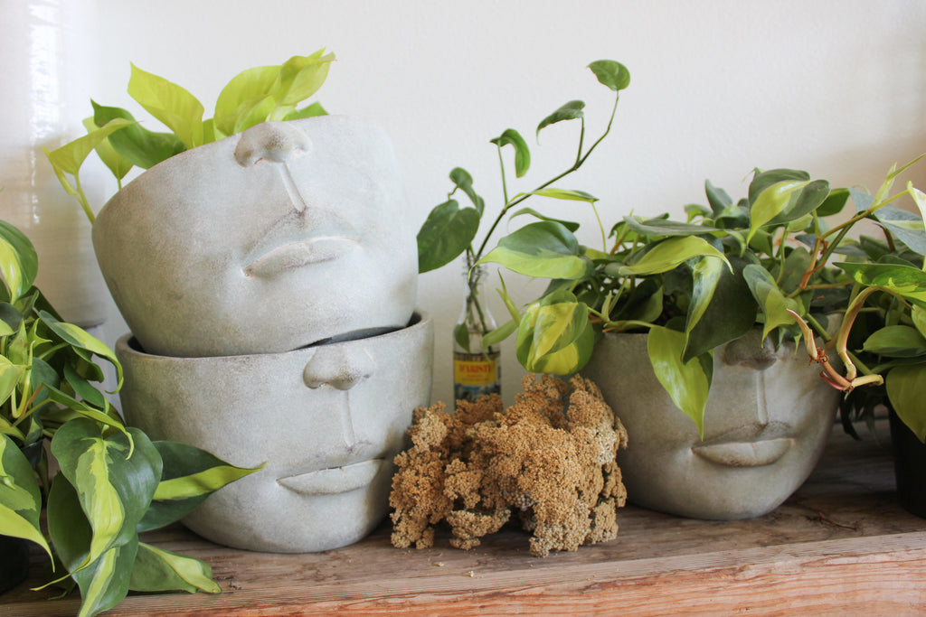 ceramic pottery heads with plants inside