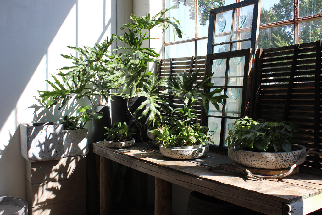 a shop window with plants and pottery