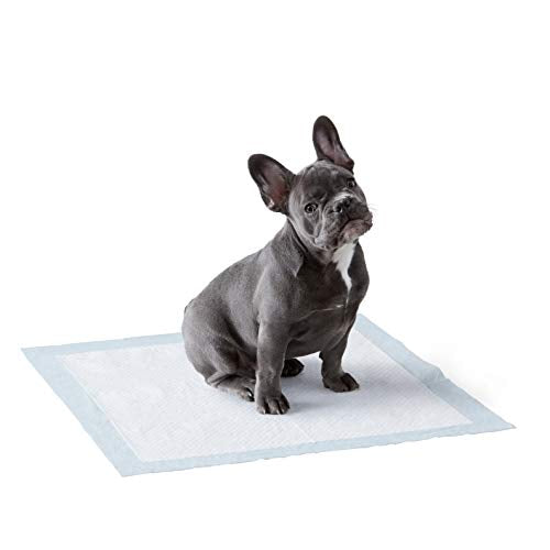 Amazon Basics Dog and Puppy Leak-proof 5-Layer Potty Training Pads with Quick-dry Surface, Regular (22 x 22 Inches) - Pack of 150