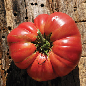 Tomate Ancestrale